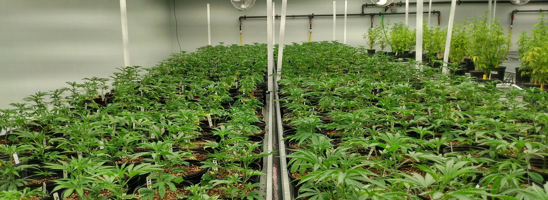 Cannabis Cultivation and Processing Program